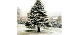 Water Christmas Tree