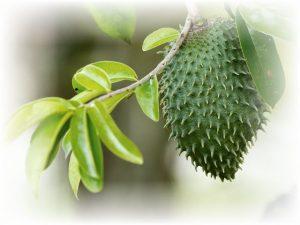 soursop-guanabana-cancer-cure